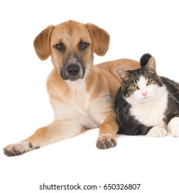 Dog and cat lying together. Square image. (1x1).