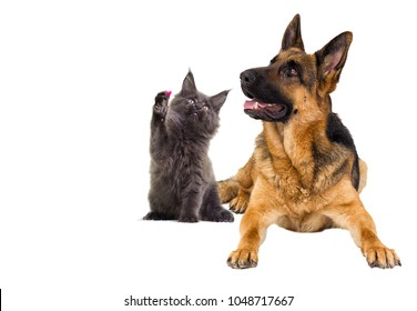 dog and cat on a white background isolated