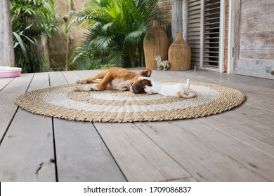 Dog and cat playing at the terrace
