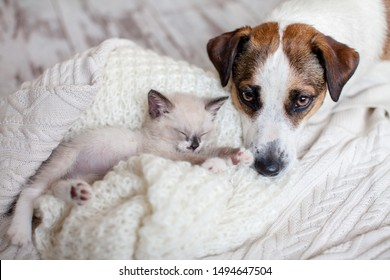 Dog and cat resting together. Dog and kitten friends