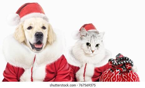 dog and cat in santa closes