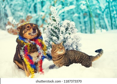Dog and cat sitting together outdoors in snowy forest near fir tree. Christmas concept