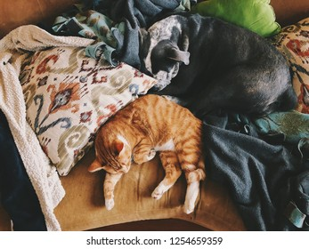 Dog and cat sleeping on the sofa