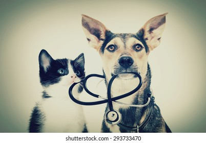 dog and a cat and a stethoscope