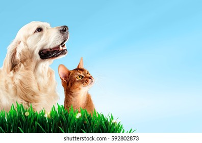 Dog and cat together on grass, spring concept.