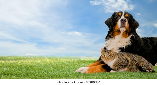Dog and cat together on grass, sunny spring day and blue sky. Panorama