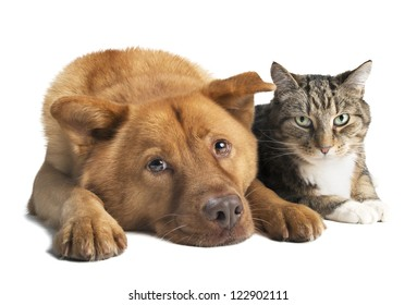 Dog and cat together on white background. Wide angle picture.