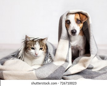 Photo of Dog and cat under a plaid. Pet warms under a blanket in cold autumn weather
