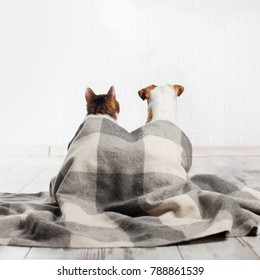 Dog and cat under a plaid. Pets sitting with their backs