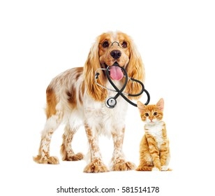 dog and cat veterinarian and a stethoscope and glasses