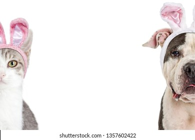 Dog and cat wearing Easter bunny rabbit ears. Closeup of faces cropped in half with room for text in white background.