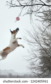 The dog catches the ball in the air, winter, snowy weather