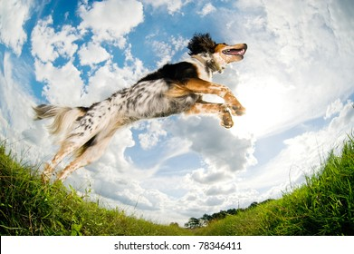 Dog caught in the middle of a jump