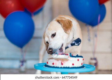 Dog celebrates birthday with nautical themed cake and balloons