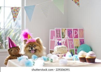 Dog celebrating birthday having a birthday party