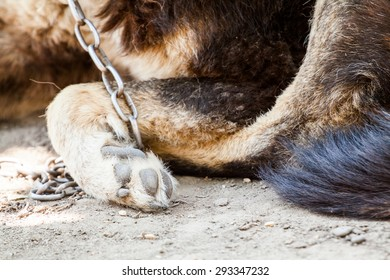 Dog in chains - details