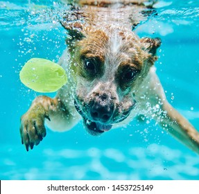Dog chases ball underwater in pool