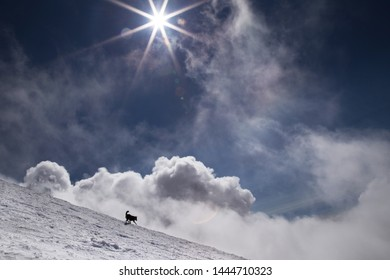 A dog chases clouds in winter mountains.