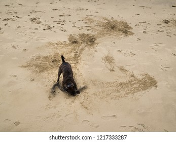 A dog chasing a stick on a sandy beach on the bank of the river Thames Londo​n