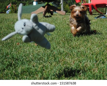 Dog chasing toy