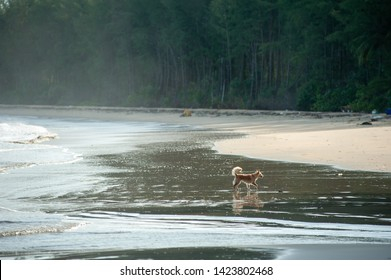 Dog chasing the wind crab at the beach