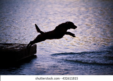 Dog: Chesapeake Bay Retriever silhouette jumping into the water