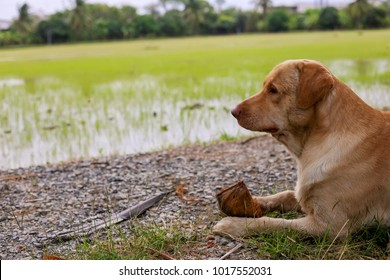 Dog chewing a coconut at green farm