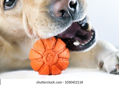A dog is chewing a toy ball.Close-up