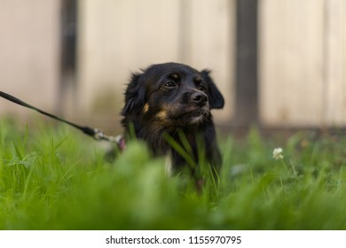 Dog chilling in  the grass