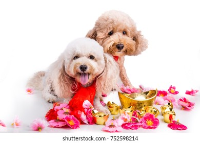 Dog in Chinese New Year festive setting in white background. 2018 is year of the dog in Chinese lunar zodiac calendar