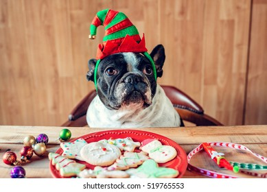 Dog with Christmas elf hat on a table with cookies and Christmas objects