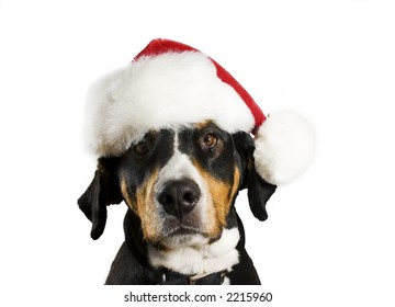 Dog with a Christmas hat (cute)