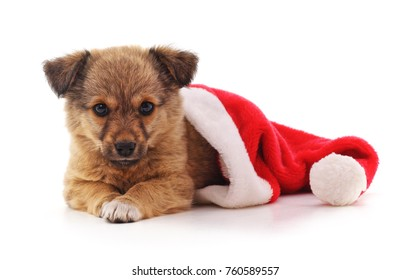 Dog in a Christmas hat on a white background.