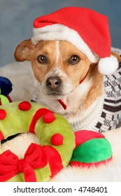 Dog with Christmas toys wearing a Santa Hat