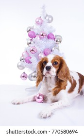 Dog with christmas tree. Christmas animal pet. Studio photo with white background and christmas tree ornaments. Cute puppy dog celebrate holiday.