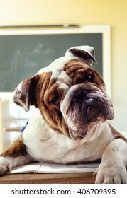 Dog in the classroom