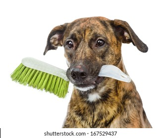 dog with cleaning  brush isolated on white background