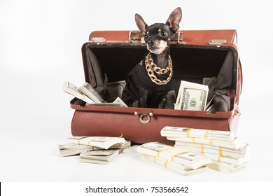 The dog climbed into the bag with the money. A rich dog.