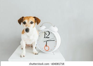 Dog and clock. Gray background. About time theme