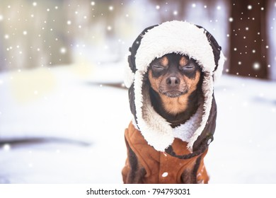 A dog with closed eyes in a hat and a sheepskin coat in the winter. Zen, meditation, yoga, enjoyment of nature and winter