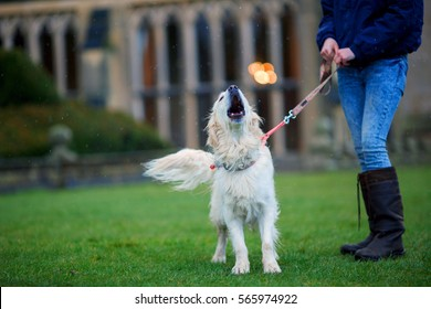 dog with closed eyes howling next to his master