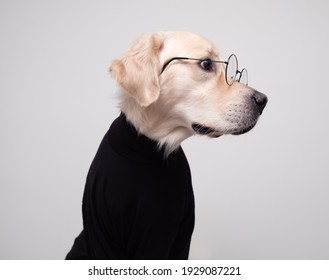 Dog in clothes. Golden retriever in round glasses and a black jacket sits on a white background. Pets concept in stylish images.