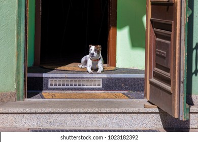 Dog in Codbus, Germany