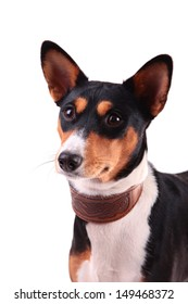 dog collar for dogs