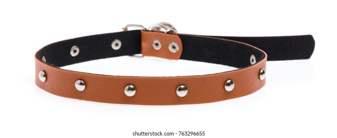 dog collar isolated on a white background