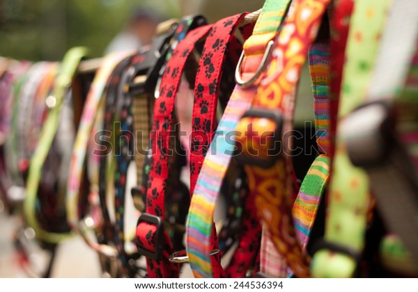 Dog collars for sale in pet store
