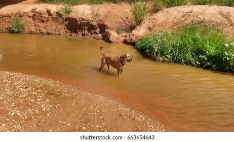 Dog cools in creek