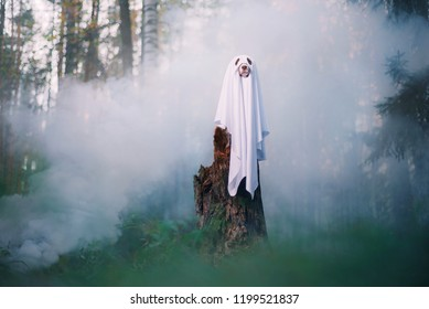 Dog is cosplaying ghost on smoke background in the forest