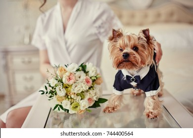 Dog costume groom smelling bouquet in hands of bride