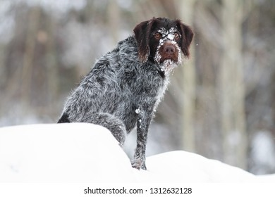 dog covered with ice sitting on the snow on winter blurred background